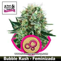 Bubble Kush – Feminizada – Royal Queen