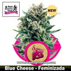 Blue Cheese – Feminizada – Royal Queen