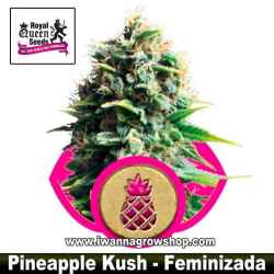 Pineapple Kush – Feminizada – Royal Queen