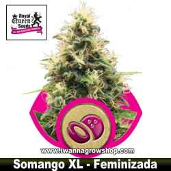 Somango XL – Feminizada – Royal Queen