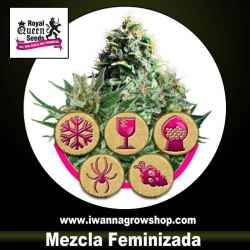 Mix Feminizadas – Feminizada – Royal Queen