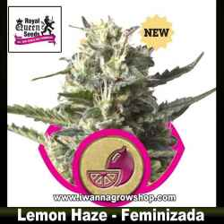 Lemon Haze – Feminizada – Royal Queen