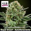 Royal Dwarf – Autofloreciente – Royal Queen