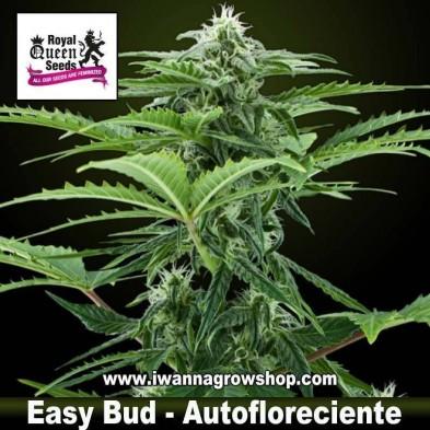 Easy Bud – Autofloreciente – Royal Queen
