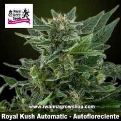 Royal Kush Automatic – Autofloreciente – Royal Queen
