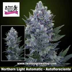 Northern Light Automatic – Autofloreciente – Royal Queen