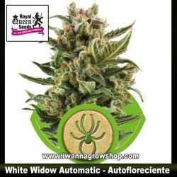 White Widow Automatic – Autofloreciente – Royal Queen