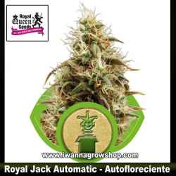 Royal Jack Automatic – Autofloreciente – Royal Queen