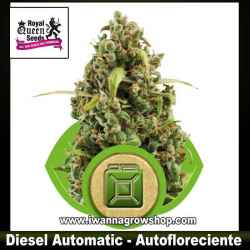 Diesel Automatic – Autofloreciente – Royal Queen