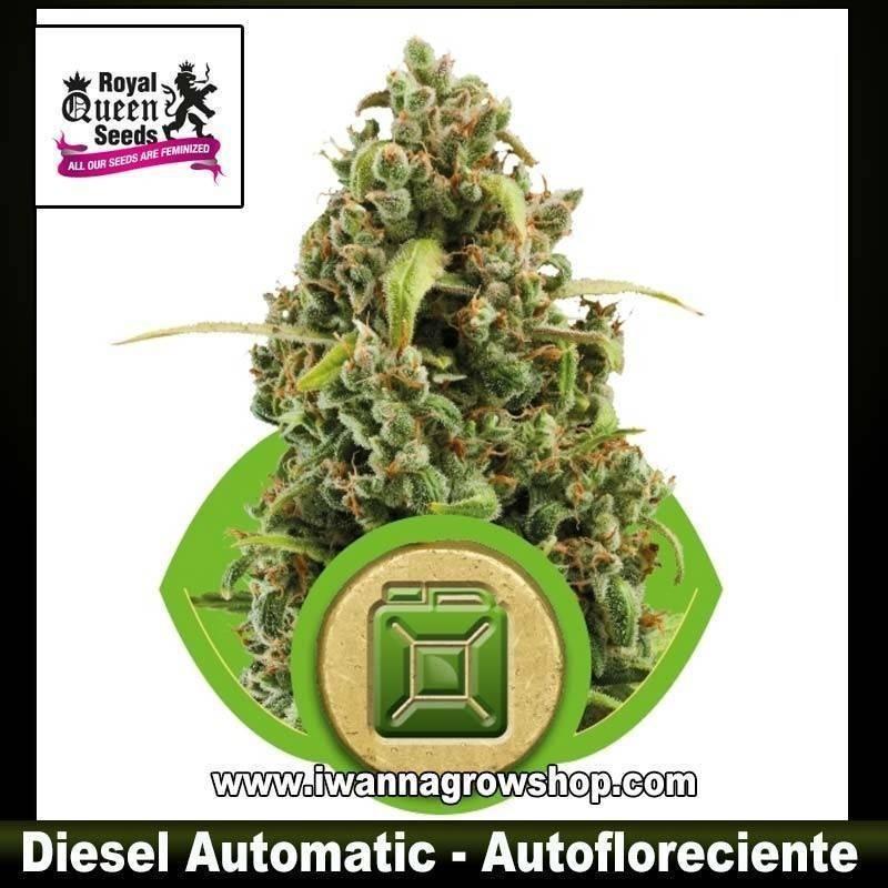 Diesel Automatic