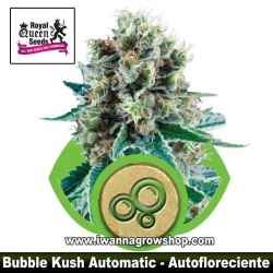 Bubble Kush Automatic – Autofloreciente – Royal Queen