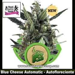 Blue Cheese Automatic – Autofloreciente – Royal Queen