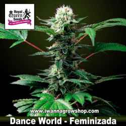 Dance World – Feminizada – Royal Queen