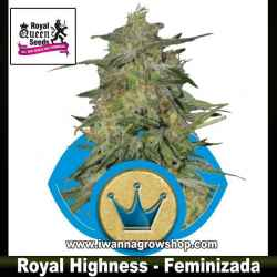 Royal Highness – Feminizada – Royal Queen