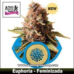 Euphoria – Feminizada – Royal Queen