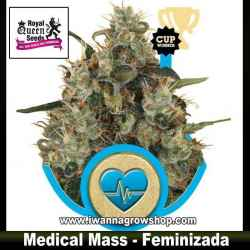 Medical Mass – Feminizada – Royal Queen