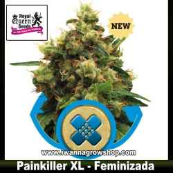 Painkiller XL – Feminizada – Royal Queen