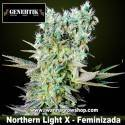 Northern Light X – Feminizada – Genehtik Seeds