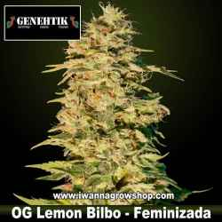 OG Lemon Bilbo – Feminizada – Genehtik Seeds