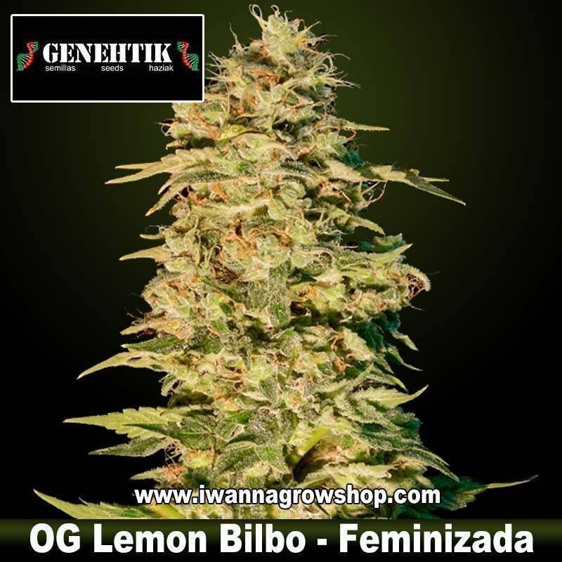 OG Lemon Bilbo