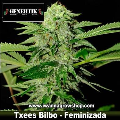 Txees Bilbo – Feminizada – Genehtik Seeds