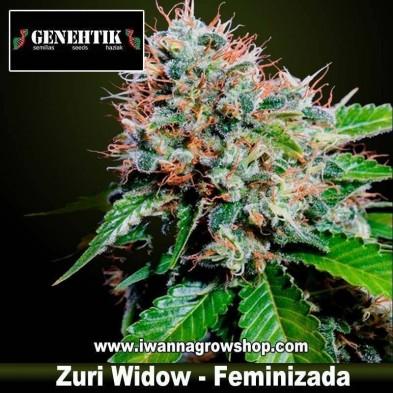 Zuri Widow – Feminizada – Genehtik Seeds