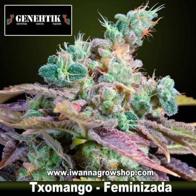 Txomango – Feminizada – Genehtik Seeds