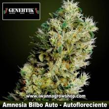 Amnesia Bilbo Auto – Autofloreciente – Genehtik Seeds
