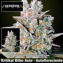 Kritikal Bilbo Auto – Autofloreciente – Genehtik Seeds