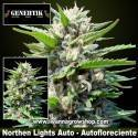 Northern Lights Auto – Autofloreciente – Genehtik Seeds