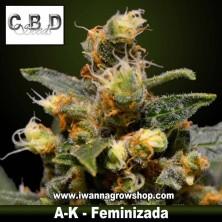 AK – Feminizada – CBD Seeds
