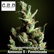Amnesia 5 – Feminizada – CBD Seeds