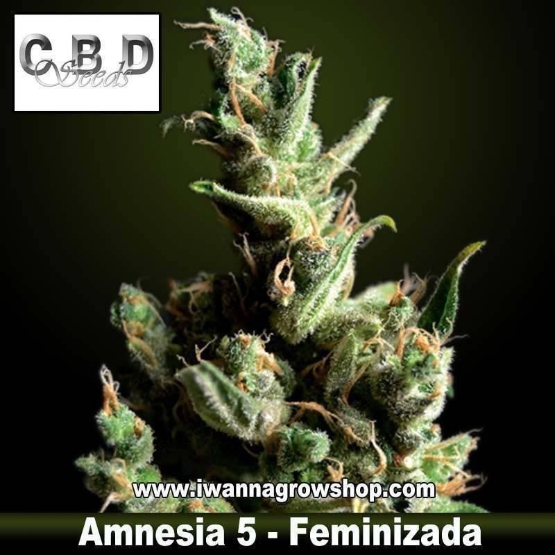 Amnesia 5
