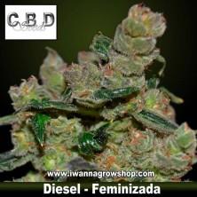 Diesel – Feminizada – CBD Seeds