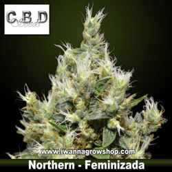 Northern – Feminizada – CBD Seeds