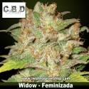 Widow – Feminizada – CBD Seeds
