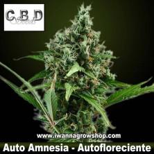 Auto Amnesia – Autofloreciente – CBD Seeds
