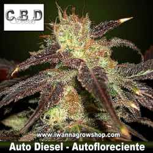 Auto Diesel – Autofloreciente – CBD Seeds