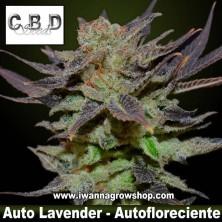 Auto Lavender – Autofloreciente – CBD Seeds