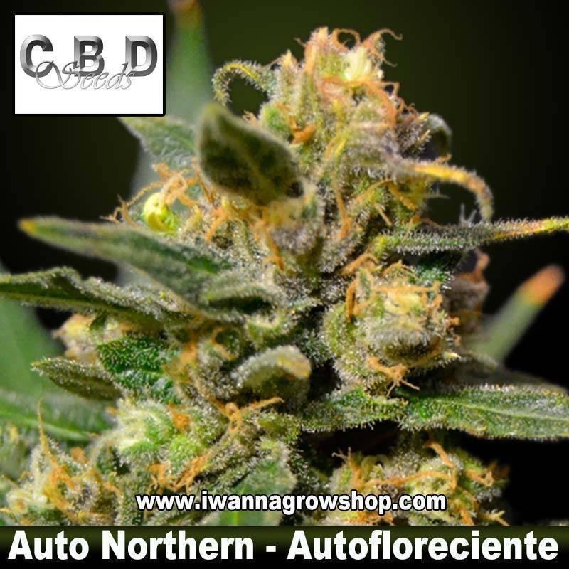 Auto Northern