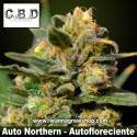 Auto Northern – Autofloreciente – CBD Seeds