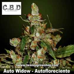 Auto Widow – Autofloreciente – CBD Seeds