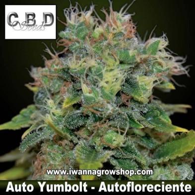 Auto Yumbolt – Autofloreciente – CBD Seeds