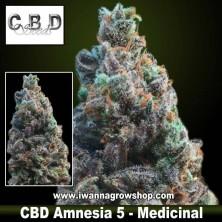 CBD Amnesia 5 – Medicinal – CBD Seeds