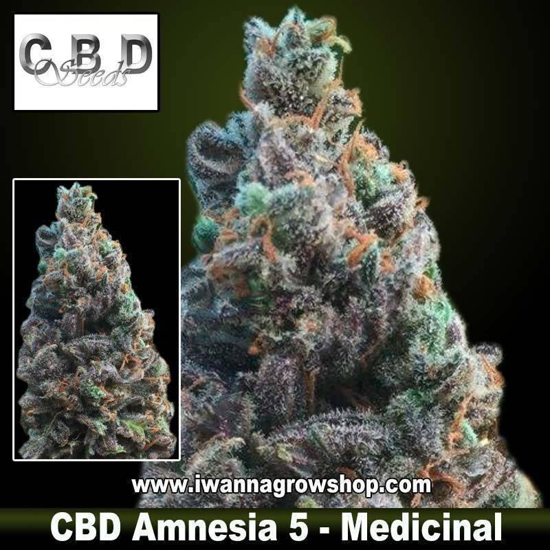 CBD Amnesia 5