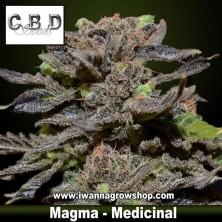 Magma – Medicinal – CBD Seeds