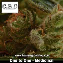 One to one – Medicinal – CBD Seeds