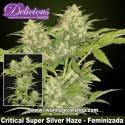 Critical Super Silver Haze – Feminizada – Delicious Seeds