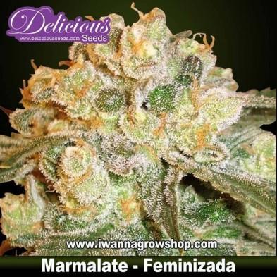 Marmalate – Feminizada – Delicious Seeds