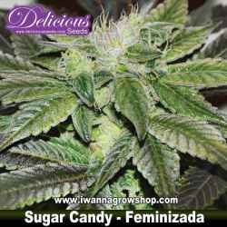 Sugar Candy – Feminizada – Delicious Seeds
